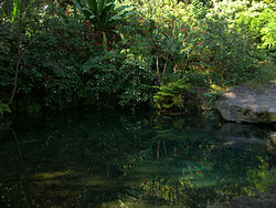 Uruapan-National-Park-Lake.jpg