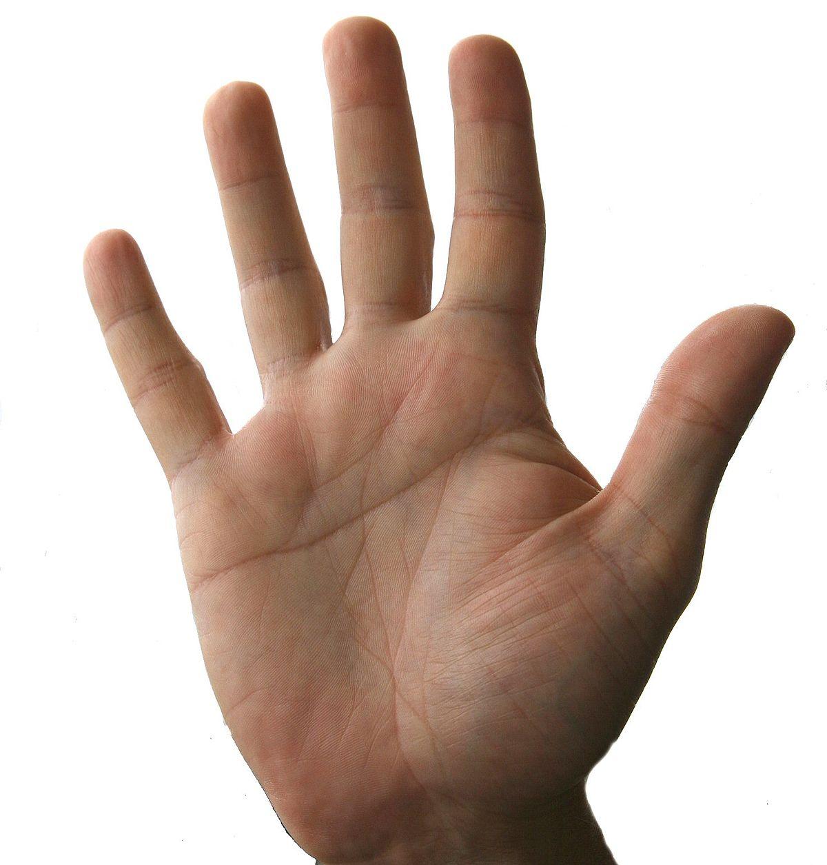 Vierfingerfurche – Wikipedia