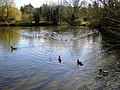Village pond, Bishopstone, Swindon - geograph.org.uk - 355545.jpg