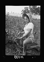Vintage activities at Richon-le-Zion, Aug. 1939. Grape picker, close up study European immigrant girl LOC matpc.19766.jpg