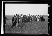 Visit to Beersheba Agricultural Station (Experimental) by Brig. Gen. Allen & staff & talks to Bedouin sheiks of district by station superintendent. Mixed group in field of grain listening to LOC matpc.20534.jpg
