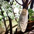 Vlinder JIHI 010.jpg
