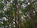Wald im Wolfstalflur Tauberbischofsheim 01.jpg