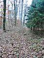Waldweg - panoramio (8).jpg