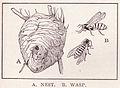 Wasp page 3079.jpg