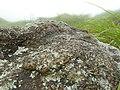Wet rock.jpg