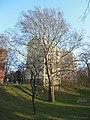 Wiener Naturdenkmal 457 - Morgenländische Platane (Döbling) d.JPG