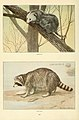 Wild animals of North America, intimate studies of big and little creatures of the mammal kingdom (Page 410) (6216705279).jpg