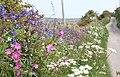 Wildflower verge in Cot Valley - geograph.org.uk - 1302410.jpg