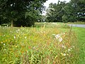Wildflowers on Brockton roundabout - geograph.org.uk - 1467713.jpg