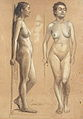 William Woodward Nude Study Standing Side and Front.jpg