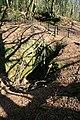 Williams Shaft, Unity Wood - geograph.org.uk - 1236100.jpg