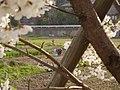 Woman farming in Wajima.jpg