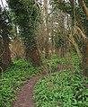 Woodland near Marshfield Bridge - geograph.org.uk - 365490.jpg