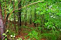 Woods-After-Rain - West Virginia - ForestWander.jpg