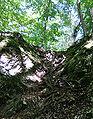 Wurzeln zwischen Kalkfelsen.jpg