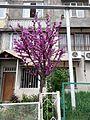 Yerevan, spring, 2016 (1).jpg