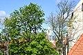 Znojmo-kaple-svatého-Václava-za-listím2019b.jpg