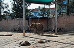 Zoo de Lisboa by Juntas 53.jpg