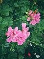 """""""Pink Flowers"""".jpg"""