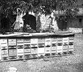 """""""Tasa"""" čebelnih panjev (začasno), Vipava 1958.jpg"""