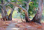 'Sunshine & Shadow-Orange Co. Park, California' by Anna Althea Hills, 1915.jpg