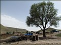 ((( نمایی از روستای سرکار اباد مراغه))) - panoramio (2).jpg