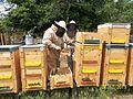 Álmodó tanya méhészet.jpg