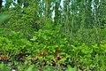 Çilek Bahçesi - panoramio.jpg