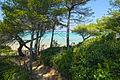 Île de Porquerolles..jpg