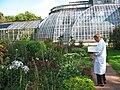 Ботанический сад РАН, цветник и оранжереи.jpg