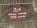 Віковий дуб, Прилуцький район, м. Прилуки, вул. Вокзальна, 36 74-107-5002 08.jpg