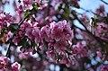 Главный ботанический сад им. Н.В. Цицина, весна 2019. Фото 2.jpg