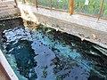 Глубинная зона бассейна Клеопатры. Глубина метров 5. Иераполис. Турция. Июль 2012 - panoramio.jpg
