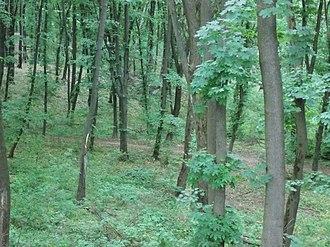 Holosiivskyi National Nature Park - Image: Голосіївський ліс 7