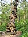 Дерево в парку.JPG