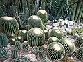 Кактусы. Ботаника.jpg