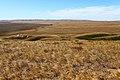 Карстовое поле Жанатаускен. Юго-западное направление - panoramio.jpg