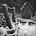 Ковпаківський лісопарк 2.jpg