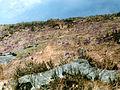 Крокусы - panoramio.jpg