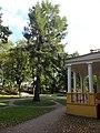 Лиственница перед господским домом (посажена А.С.Пушкиным).jpg