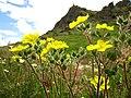 Маркови Кули - Растителен свет (94).JPG
