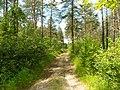 Между с-т Русь и Селиванихой 2013 - panoramio (4).jpg
