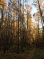 Осень в нашем лесу.jpg
