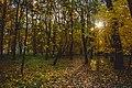 Осінні алеї в парку. 2017рік.jpg