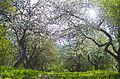 """Парк """"Заріччя"""" навесні.jpg"""