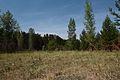 Полянка - panoramio (1).jpg