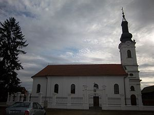Church of the Transfiguration of the Lord, Trpinja - Church of the Transfiguration of the Lord