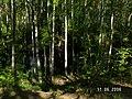 Река Волчья - panoramio.jpg
