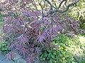 Рослини ботанічного саду імені М.Гришка навесні.jpg